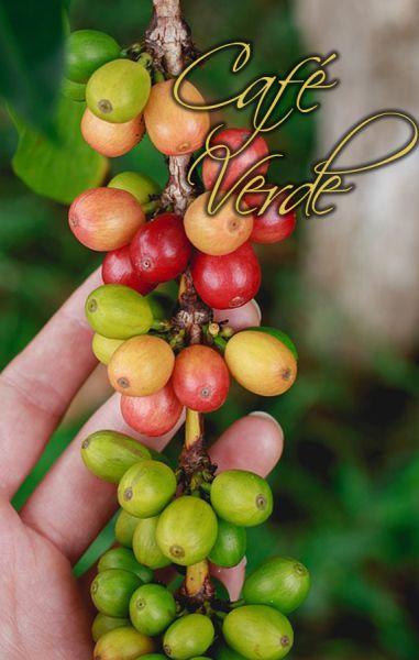 CAFE VERDE ☕ Beneficios, Usos y Propiedades - ForexPros Café