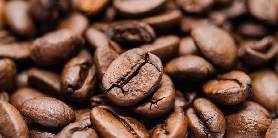 Taxonomía del Café, forexpros cafe