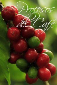 cafe tipo exportacion, cafe de exportacion