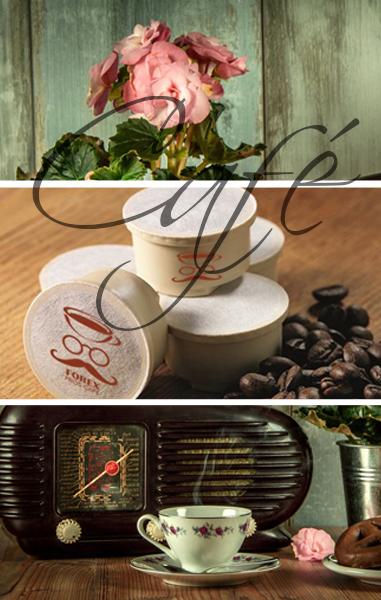 ▷ Morfología de la planta de café | Todas las Características y Estructura del Cafeto