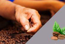 Diferencia Café Mezcla y Natural